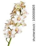white orchid on white.   Shutterstock . vector #100000805