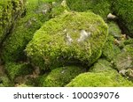 Moss Covered Stone