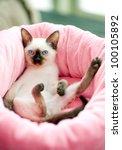 Stock photo thai kitten in pink pet bed 100105892