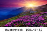 magic pink rhododendron flowers ... | Shutterstock . vector #100149452