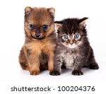 Stock photo the puppy of the spitz dog with and kitten 100204376
