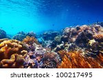 underwater shoot of vivid coral ... | Shutterstock . vector #100217495