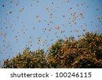 Monarch Butterfly Biosphere...