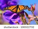 Monarch Butterfly On A Purple...