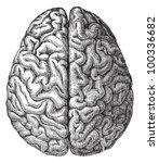 human brain   vintage...