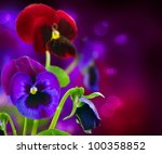 Spring Flowers Pansy Over Black ...