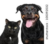 Stock photo close up portrait of cat and dog on white background 100392032