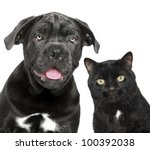 Stock photo dog and cat together close up portrait on a white background 100392038