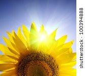 Close Up Of Sunflower Over Blu...
