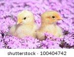 easter chicks   Shutterstock . vector #100404742