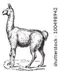 Lama  Vintage Engraved...