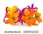 Blooming Yellow Ornithogalum...