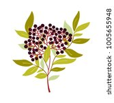 simple botanical illustration...   Shutterstock .eps vector #1005655948