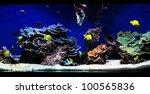 Fragment Of Blue Aquarium Full...