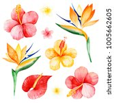 watercolor tropical flowers... | Shutterstock . vector #1005662605