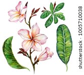 Stock photo pink plumeria flower on a twig floral set flowers and leaves isolated on white background 1005710038
