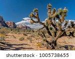 Beautiful Landscape Of Cactus...
