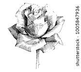 wild flowers roses isolated.... | Shutterstock .eps vector #1005847936