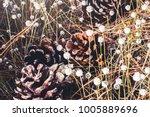 natural background. eriocaulon... | Shutterstock . vector #1005889696