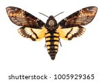 female death's head hawk moth ... | Shutterstock . vector #1005929365