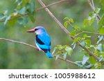Colorful Bushveld Kingfisher...