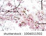 background of beautiful pink...
