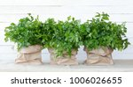 fresh parsley from the garden.... | Shutterstock . vector #1006026655