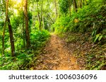 the forest tree with abundance. | Shutterstock . vector #1006036096