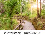 the forest tree with abundance. | Shutterstock . vector #1006036102