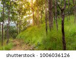 the forest tree with abundance. | Shutterstock . vector #1006036126