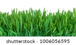 green grass. natural grass... | Shutterstock . vector #1006056595