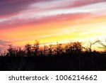 dawn in the swamps of florida | Shutterstock . vector #1006214662