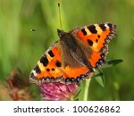 Small Tortoiseshell Resting On...