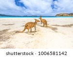 Stock photo kangaroos standing at lucky bay in cape le grand national park near esperance in western australia 1006581142