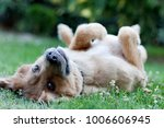 Stock photo portrait of a happy dog 1006606945