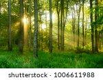 natural forest of beech trees... | Shutterstock . vector #1006611988