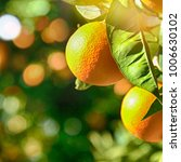 Small photo of Citrus tree background