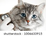 Stock photo veterinarian at vet clinic are examining cute grey cat with blue eyes with stethoscope medicine 1006633915