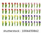realistic set tulips vector.... | Shutterstock .eps vector #1006650862