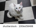 white kitty with blue and green ... | Shutterstock . vector #1006658488