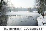 a wild mallard duck is walking... | Shutterstock . vector #1006685365