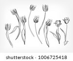 Tulips Vector Design Elements...