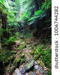 a trail leads through dense...   Shutterstock . vector #1006744282