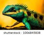lizard water dragon   Shutterstock . vector #1006845838