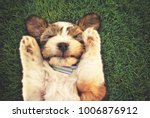 Stock photo authentic and unique photo of a mixed breed puppy with her paws by her head covering her ears 1006876912