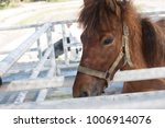 big brown horse in the farm  | Shutterstock . vector #1006914076