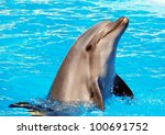 dolphins | Shutterstock . vector #100691752