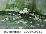 frog animal reptile  | Shutterstock . vector #1006919152