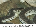 snake in forest  wild animals | Shutterstock . vector #1006944016