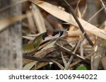 snake in forest  wild animals | Shutterstock . vector #1006944022